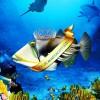 Akvaryum'da bir sanat eseri; Picasso Balığı
