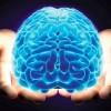 Beyin hakkında yanlışlar ve doğrular